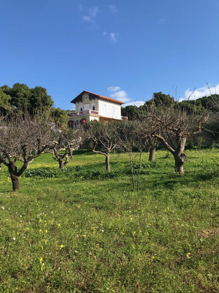Anwesen mit eigenem Olivenhain